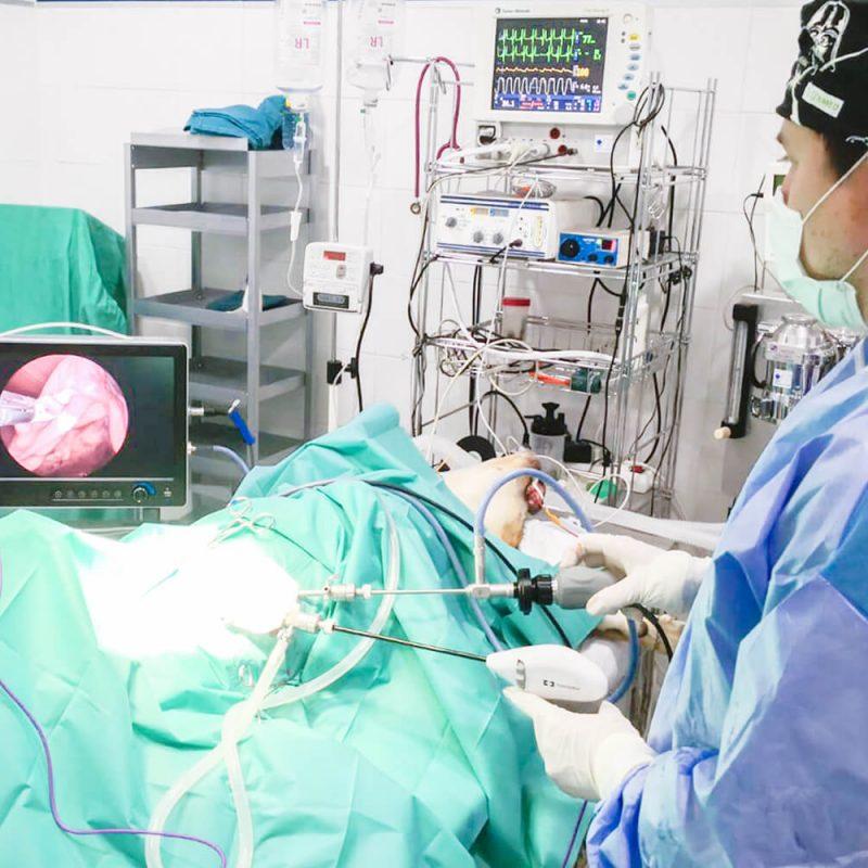 centre-veterinari-salou-cirugia-minima-invasio