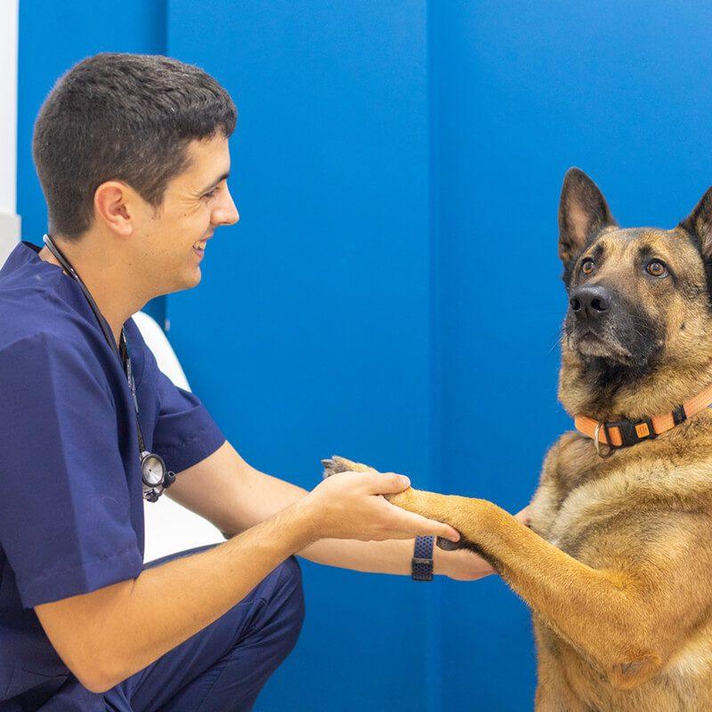 centre-veterinari-salou-educacio