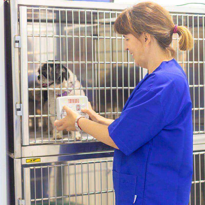 centre-veterinari-salou-hospitaitzacio