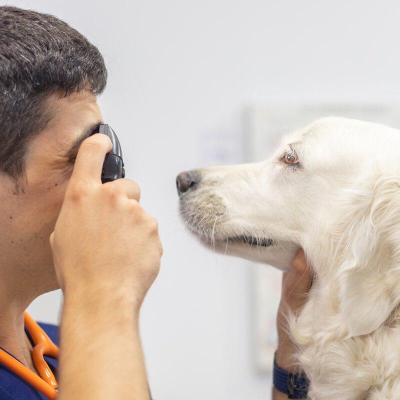 centre-veterinari-salou-oftamologia