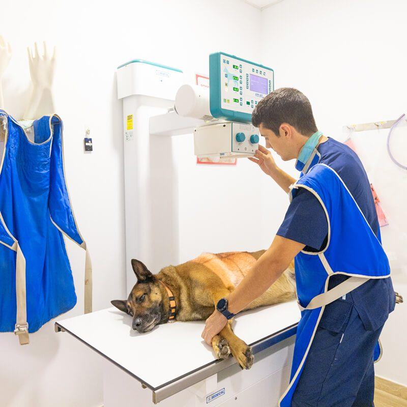 centre-veterinari-salou-radiografia