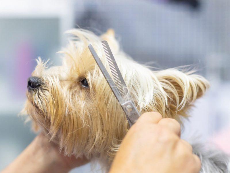 salou-centre-serveis-perruqueria-gos